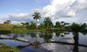 Stagno per la piscicoltura a Bagata