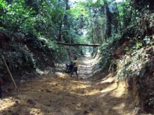 La route entre Monkoto et Bokele pendant les travaux